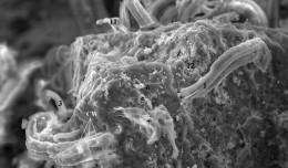 4-meteorite-bacteria4
