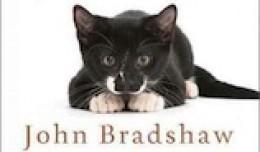 bradshaw-cat-sense-260x152-1385581769