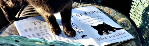 cat-on-cat-sense