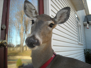 Dillie the Deer: speaking to people in potent, poignant, often profound ways.