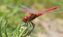 dragonfly-featured
