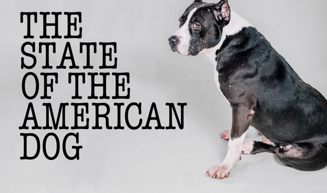 state-american-dog