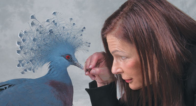 Michelle Raffin with a Blue Crown Pigeon: 'I admired birds from a distance, but it never occurred to me that they would have personalities, or be very intelligent or possess most of the endearing qualities that we look for in friends.'