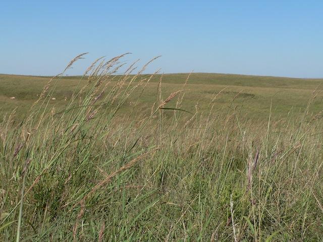 The Willa Cather Memorial Prairie in Webster County, Nebraska