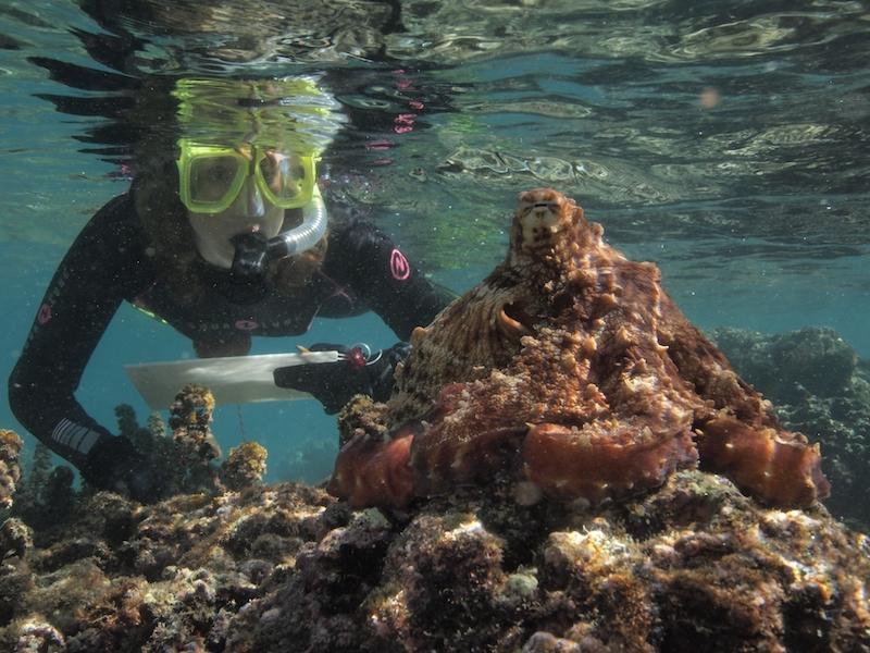 Sy Montgomery at work, interviewing an octopus. (Photo: David Scheel)