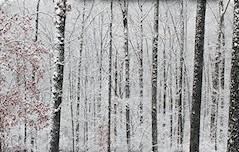 david-wood-christmas-gift